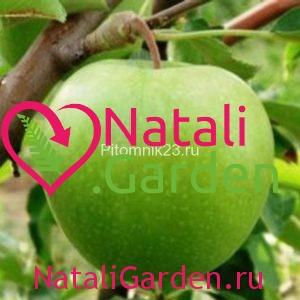 Саженцы яблони Криспин (Муцу)