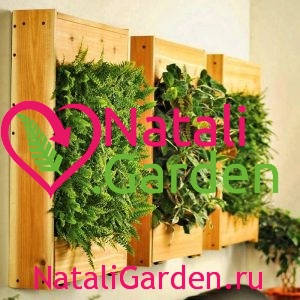 Цветы для озеленения