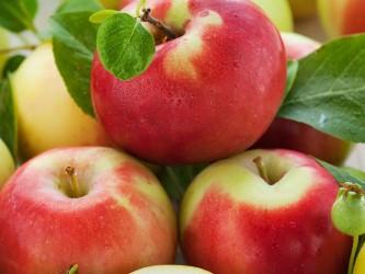 Саженцы яблони Прима